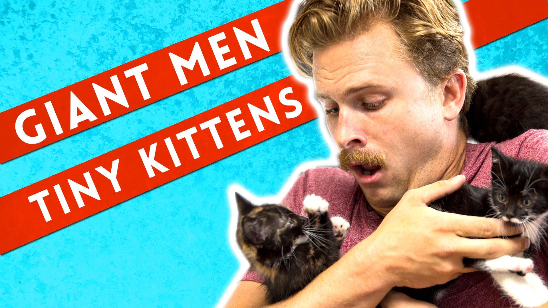 BuzzFeed котята