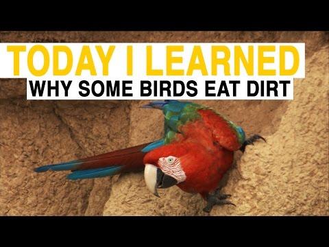 datos curiosos - aves