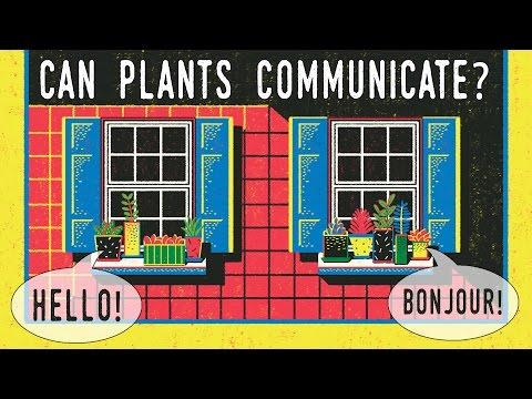 datos curiosos - plantas