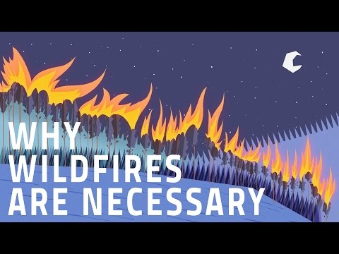 datos curiosos - incendios