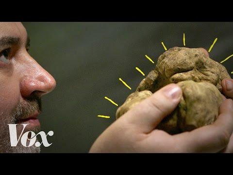 cultura general trufas