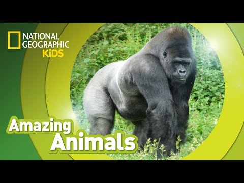 videos para niños sobre primates