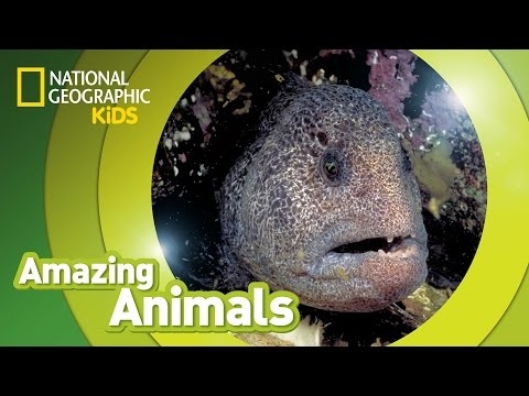 videos para niños sobre animales