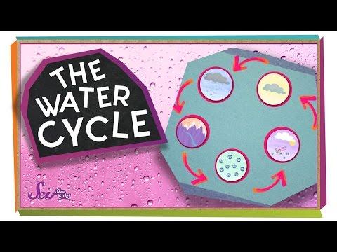 Videos para niños sobre el ciclo del agua