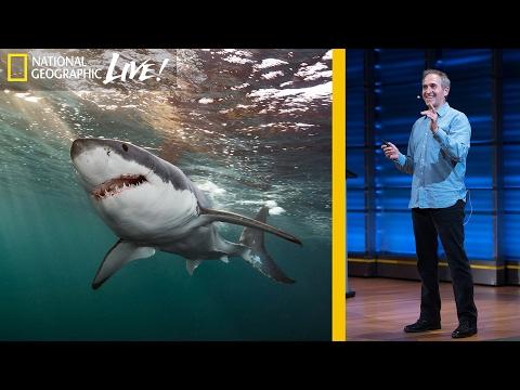 national geographic y los tiburones