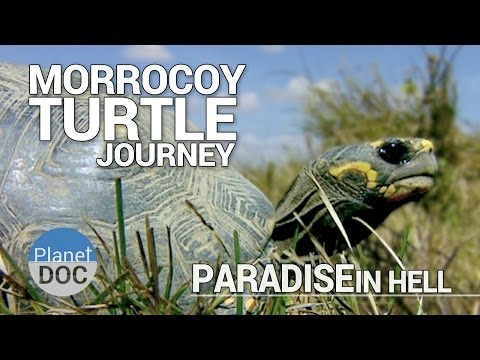 la naturaleza y las tortugas