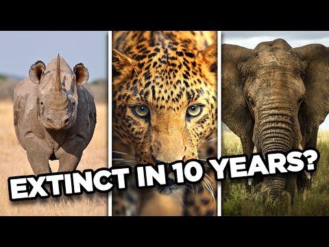 top 10 animales