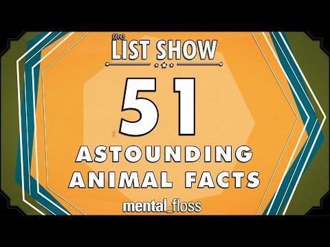 mitos comunes animales