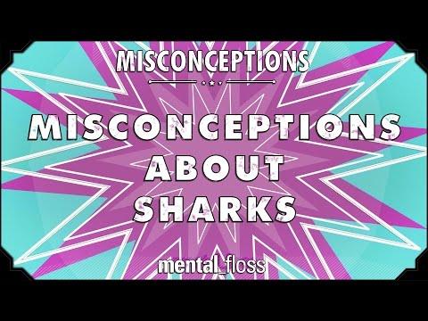 mitos comunes tiburones