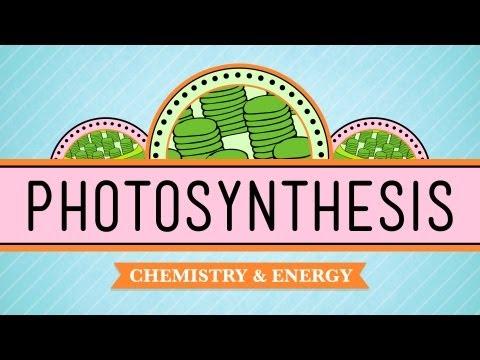 técnicas de estudio y la fotosíntesis
